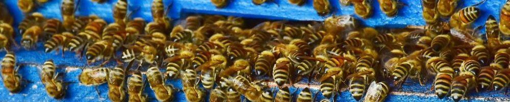 Bienenstock_3